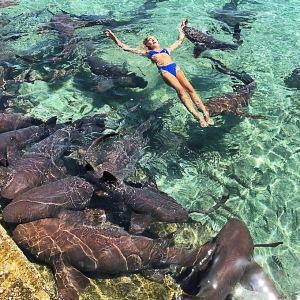 Модель хотела сфотографироваться с акулами, позабыв, что они хищники