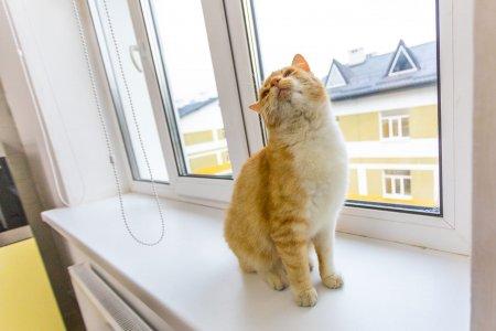 «Напился дорыжих котиков»— Порошенко высмеяли из-зафото всоцсети