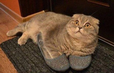 Почему в квартире должен жить кот? Ответ поражает!